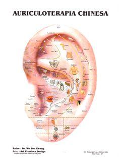 Medicina Oriental: Pontos da Auriculoterapia – Parte 01
