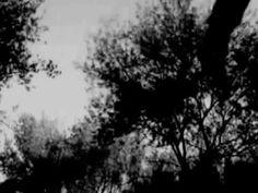 Magpie Video Presents : The Europeans - 'Acid Rain'