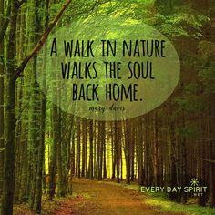 Soak in healing light. xo Get the app of inspiring wallpapers at ~ www.everydayspirit.net xo #nature #soul #hiking
