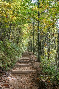 Experience the best hikes and viewpoints at Great Smoky Mountains National Park with this list of things you can't miss -- written by a former park ranger! Great Smoky Mountains, Tennessee Vacation, Gatlinburg Tennessee, Gatlinburg Vacation, Nashville Vacation, Mountain Trails, Mountain Hiking, Smoky Mountain National Park, Appalachian Trail
