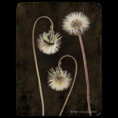 "Miró von Laugaricio na Instagrame: "". . . . . #artistic #art #creative #gallery #artschool #arty #graphic #gallery #artcollection #impression #photography #photoart…"" Art School, Living Room Designs, Photo Art, Dandelion, Gallery, Creative, Artist, Flowers, Pictures"