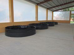 Koi Fish Care, Fish Farming, Tarpaulin, Outdoor Furniture, Outdoor Decor, Home Appliances, Home Decor, Greenhouses, Tanks