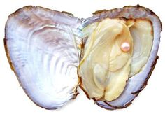 ❥ oyster and pearl