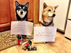 http://dogshaming.tumblr.com/