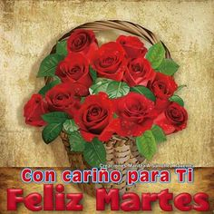 253 Mejores Imágenes De Rosas Amazing Flowers Beautiful Flowers Y