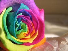 Rainbow Rose by Found-Missing-89 on DeviantArt