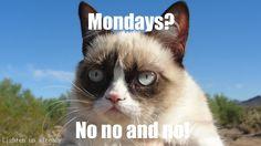 Wallpapers HD, Desktop Backgrounds, Images, Pictures and I Hate Mondays, Grumpy Cat, Cat Cat, Cat Wallpaper, Hd Images, Cats, Pictures, Animals, Weekday Quotes