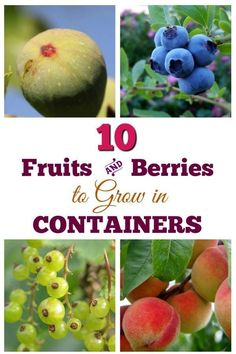 These fruits and berries can grow in containers where space is limited or to decorate a patio. #containers #gardentips #empressofdirt
