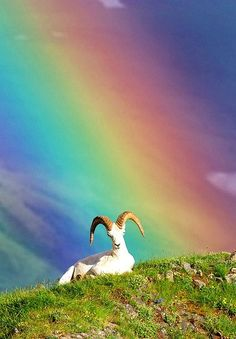 He's not even looking for the pot of gold... -- [REPINNED by All Creatures Gift Shop]