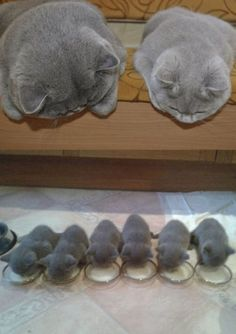 Mamães gatas e seus filhotes