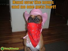 This is a stick up Funny Animal Pictures, Dog Pictures, Funny Animals, Cute Animals, Animal Pics, Boxer And Baby, Boxer Love, American Boxer, Boxer Dog Puppy