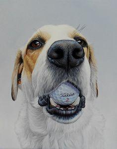 """Titleist 2"", 12"" x 15"", oil on canvas, 2015 #dogs #dog #dogart #art #golf…"