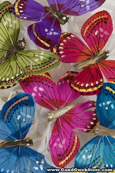 "3"" FEATHER BUTTERFLY ASSORTED PKG/12"