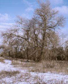 https://flic.kr/p/PFVjwe | Etude #161204DSC2770pnrV2. | Winter landscape with asokaram.Dnieper marshes, Alexandrov forestry district,Ukraine,Zaporozhye.
