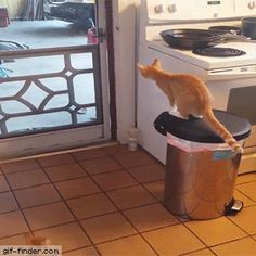 Cat Breakout | Gif Finder – Find and Share funny animated gifs