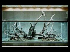 What would you expect for the personal aquarium of Takashi Amano...nothing less for certain!!!