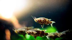 8 Aquarium catfish for community tanks