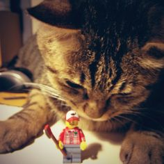 #Lego #cats - @angeline_chen- #webstagram
