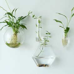 Hexagon Wall Terrariums//Indoor Wall Bubble Bowl //Cone Wall Hanger Planters//Oval Glass Wall Vase//TV Wall Decorate//Housewarming Gift by NewDreamWorld on Etsy https://www.etsy.com/listing/251055767/hexagon-wall-terrariumsindoor-wall