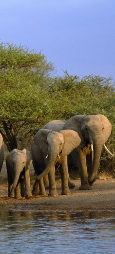 Elephant family at the watering pool!
