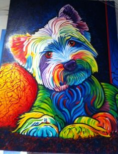 Westie. Very cool. Representative of this white dog's extremely colorful personality?