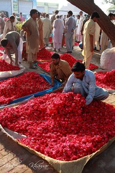 Roses for sale in the flower market in Lahore, Pakistan