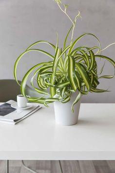 Grønnrenne Planter Pots, Interior, Indoor, Interiors, Plant Pots, Interieur