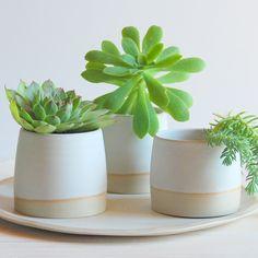 succulent set by PotsbyNives