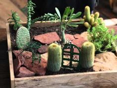 "Jeremie | Cactus mini garden quick ""How To"" video."