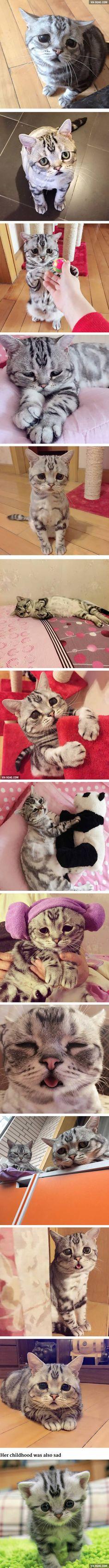 """The Saddest Cat On The Internet"""