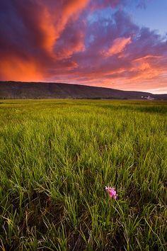 Yellowstone National Park @ www.jaypatelphotography.com