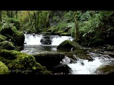 RELAXATION MEDITATION-Soothing Sounds of Nature-Water Flowing-Tranquil Bird Song