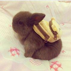 Hier is een schattig konijn met een rugzakje