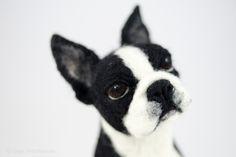 Boston terrier felted © Olga Timofeevski
