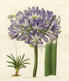 Gallery.ru / Фото #55 - Анатомия растений 1 - lanaluz
