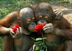 Ohhh, look at that, they stopped to smell the roses ♥