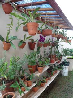 Orchid grow station. Need this for the side of my house to keep non-bloom time orchids. #flores