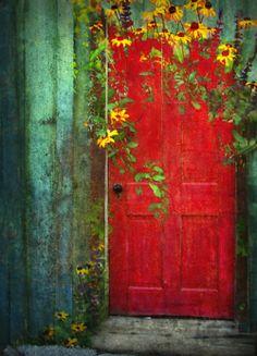 Red door and daisies