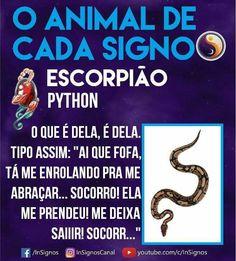 Read Animal De Cada Signo from the story Signos by Sexytaekookv (𝙶𝙰𝚃𝙸𝙽𝙷𝙰) with reads. Mbti, Horoscope, Tarot, Astrology, Zodiac Signs, Wattpad, Humor, Reading, Animals
