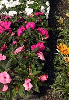 Como plantar um jardim de plantas anuais