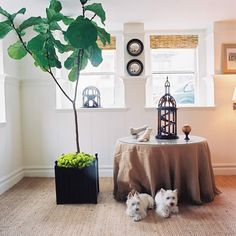 BURLAP TOP TABLE | ... table, skirted round table, burlap skirted table, houseplant, fiddle