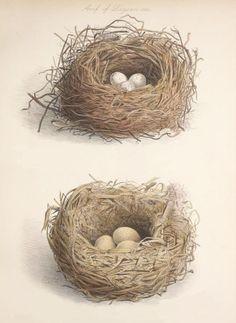Free freebie printable vintage nests clip art