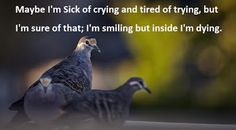 Quotes and Sayings: I'm Smiling But Inside I'm Dying