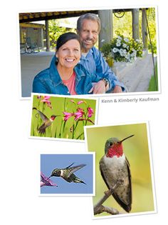Become a Hummingbird Expert! Learn tips on identifying and attracting hummingbirds from our birding experts the Kaufmans.
