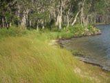 Living Shoreline at Churchill Oaks