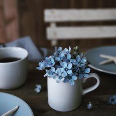 食卓に小さなお花。 今の時期ブルースターがとっても可愛い〜 #青い花 #花撮影 #ブルースター #fleur #camera #flowerstagram #flower #フラワーフォト #テーブルコーディネート #tablephoto #フォトスタイリング #coffeeandseasons #slowlife #countryliving #living