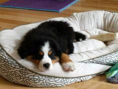 Buddy at 9 weeks