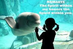 Beluga whale smiling at young girl. Cute animal pictures and happy feel good pictures. Steve jobs and bob marley quotes - adorable animals, bulldog Sup Girl, Photo Voyage, Wale, We Are The World, Marine Life, Sea Creatures, Under The Sea, Stuffed Animals, Beautiful Creatures
