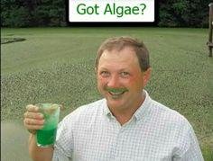 No More Algae with The Weeders Digest http:www.WeedersDigest.com