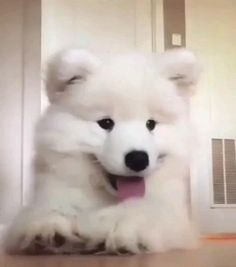 Cute Baby Dogs, Cute Little Puppies, Cute Funny Dogs, Cute Dogs And Puppies, Cute Little Animals, Cute Funny Animals, Cute Cats, Tierischer Humor, Gato Gif